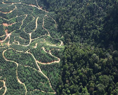 Perkebunan Dan Perhutanan